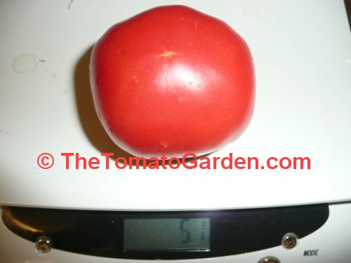 Anna Russian Tomato weight