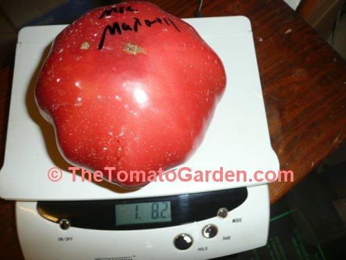 Thetomatogarden Mrs Maxwells Big Italian Tomato